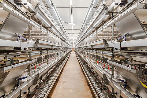 Univent Starter rearing poultry cage